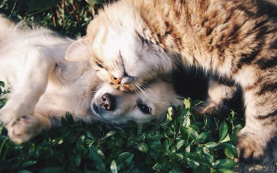 How Pets Can Help Your Mental Health